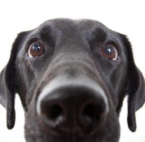 Hundebürste Kurzhaar